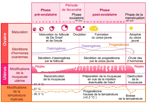 infographie_fichiers_tableau